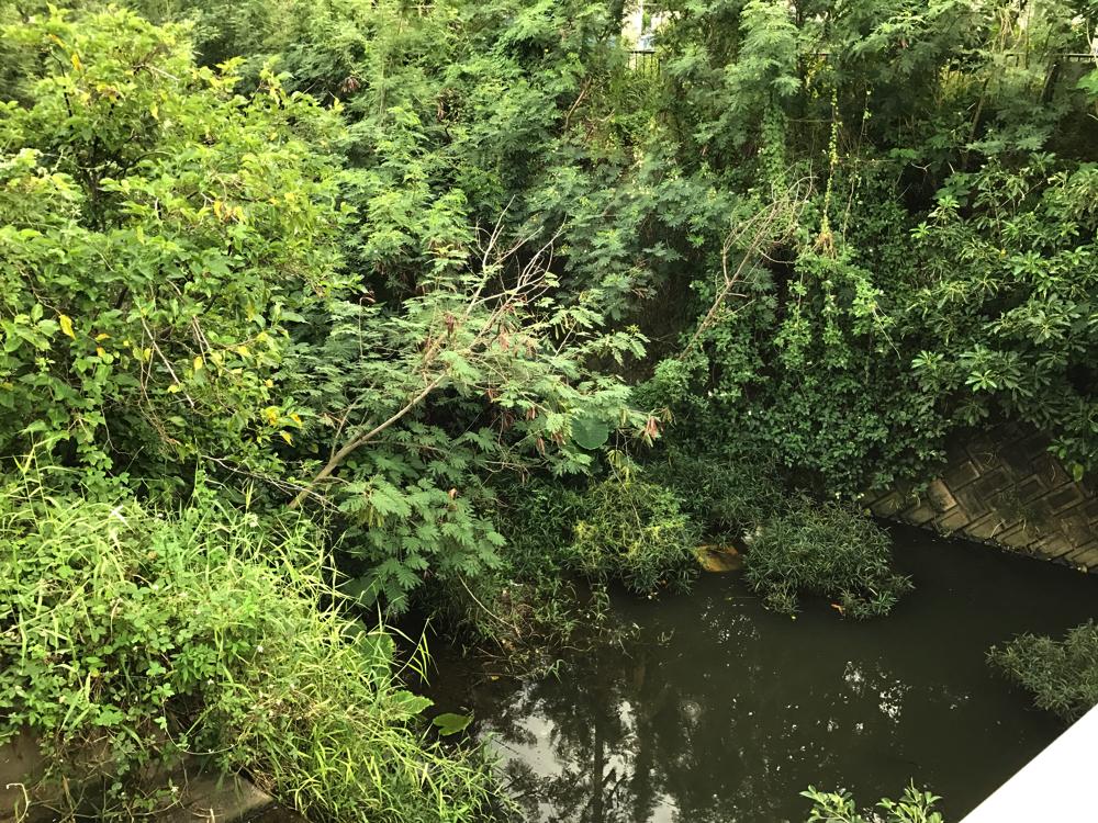 新川川、また草木が伸び放題じゃないか