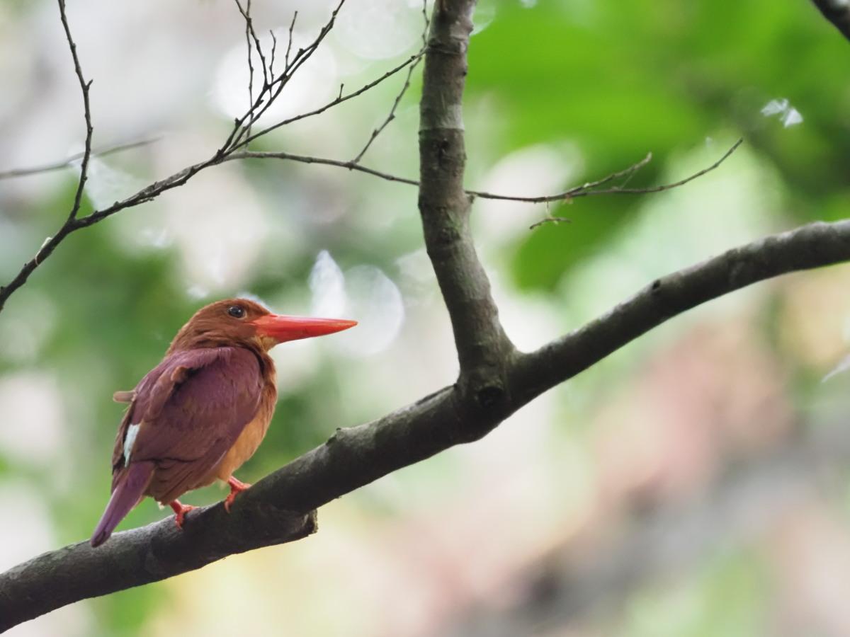 今日の鳥活