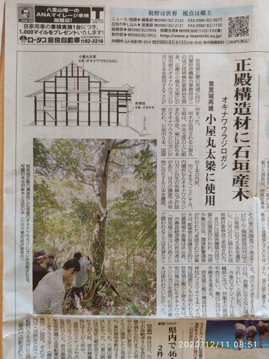 石垣島の貴重な木を首里城に献上するのってどうよ