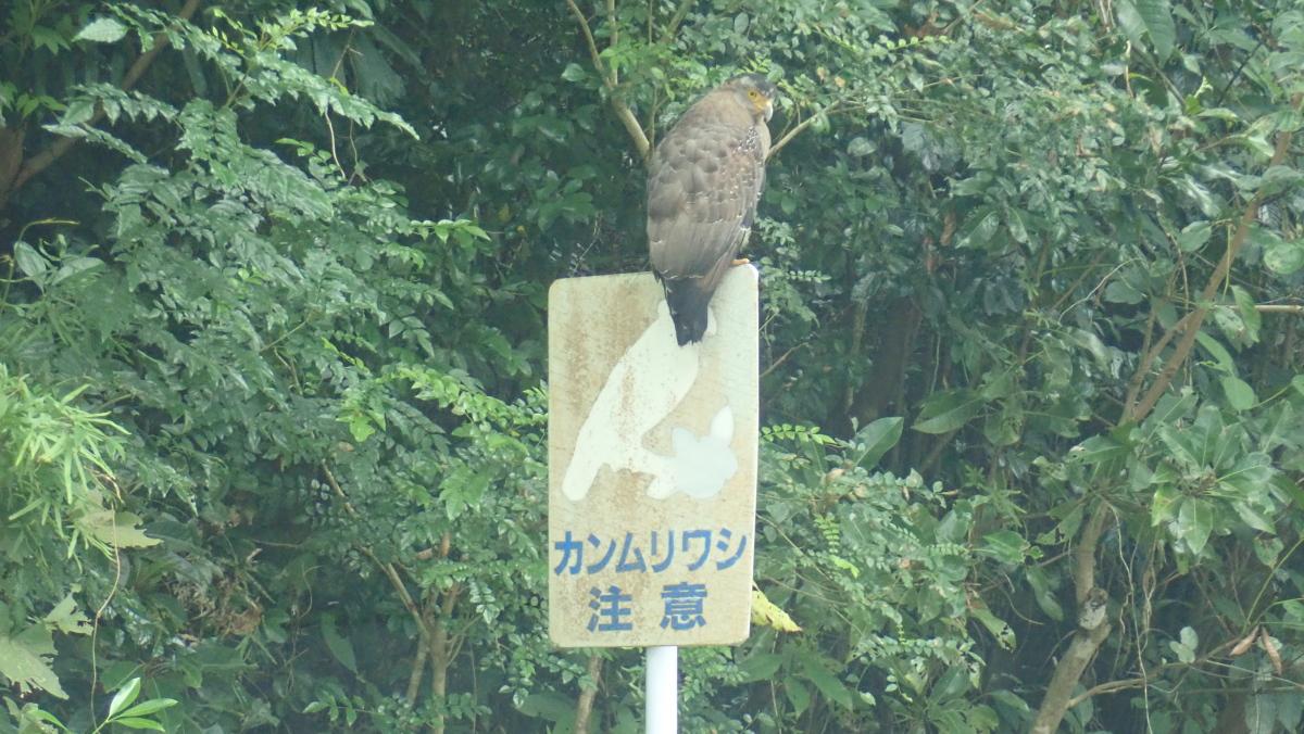 今年初、石垣島一周ツアー