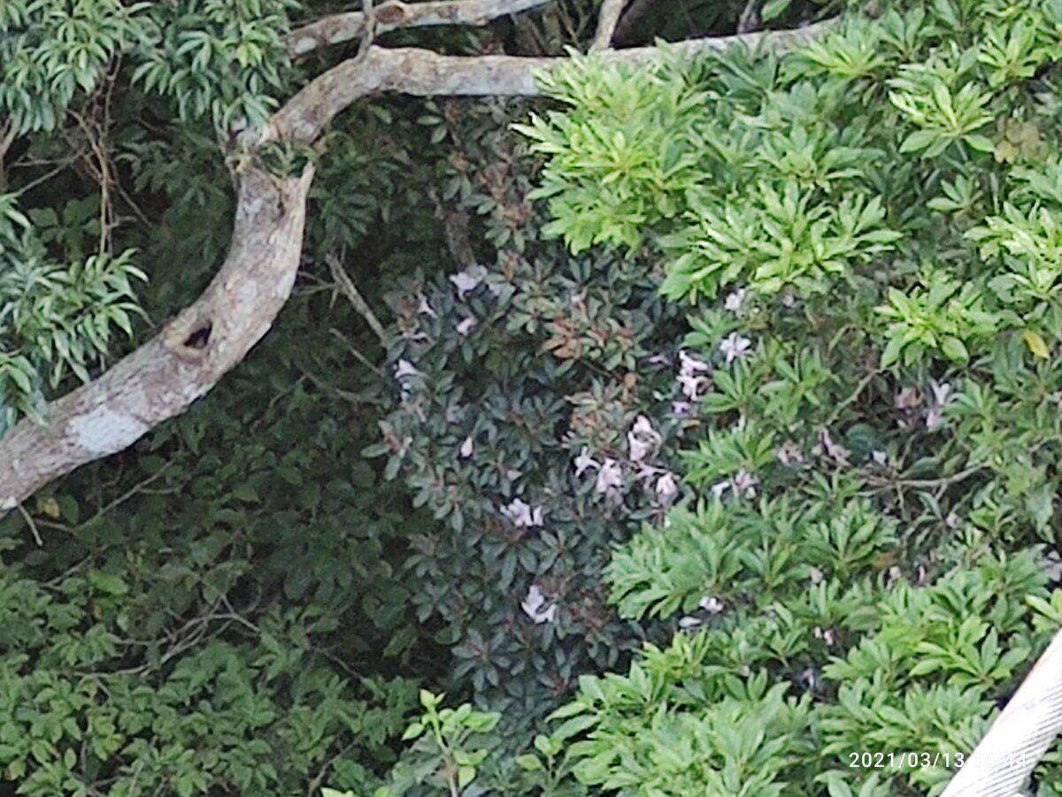 聖紫花の橋のすぐ下にセイシカが!