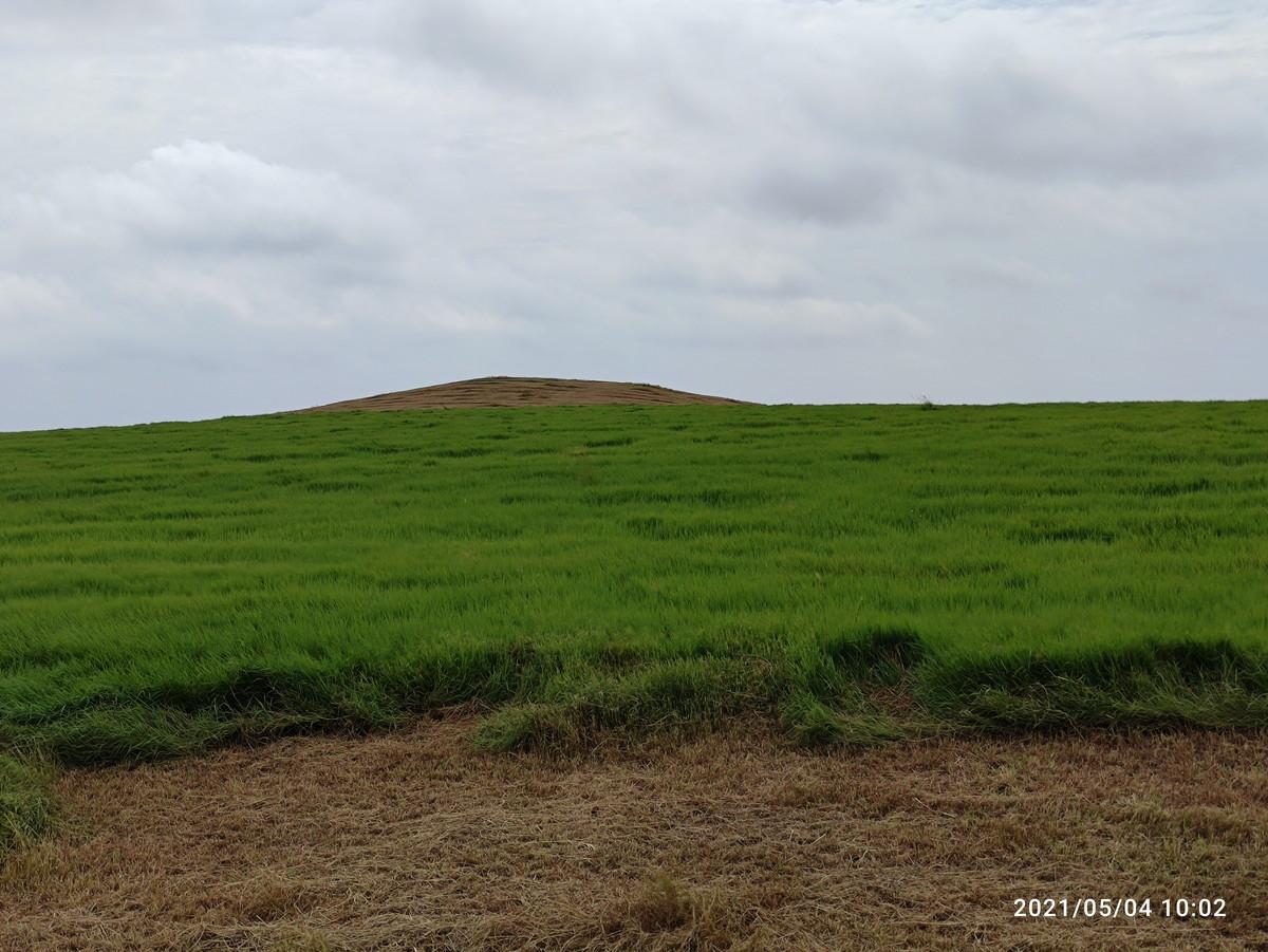 安室奈美恵の丘