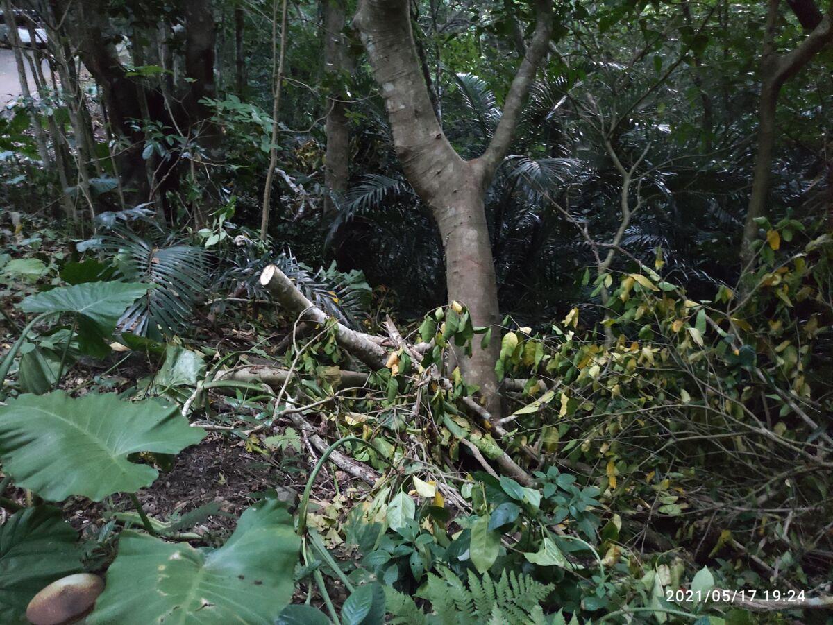 前勢岳林道の伐採がひどすぎる